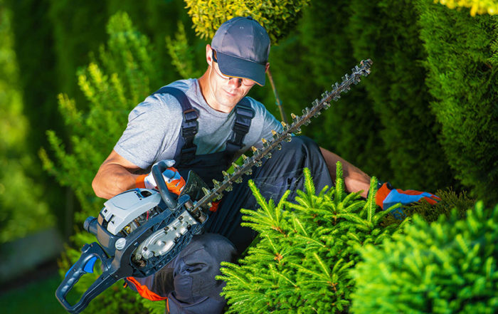 Tree Care: DIY Or Call A Professional?