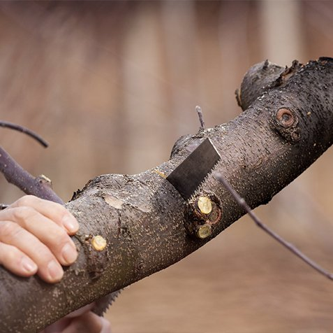 san antonio tree service near me