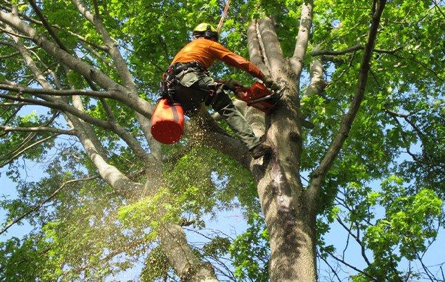san antonio tree care guarantee